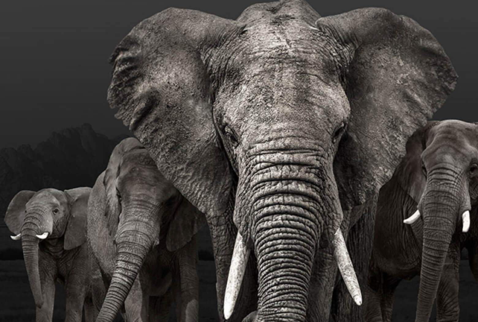 Bild einer Elefantenherde